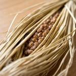 髪の毛はタンパク質でできているアミノ酸から補給成分を知る